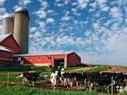 Ферма на разбор