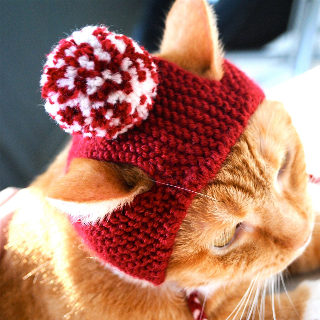 Шапочка для кошки своими руками сшить