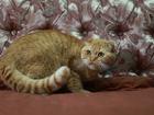 Фотография в Кошки и котята Продажа кошек и котят Предлагаю (все фото реальные)Супер Плюшевых в Минске 3000000