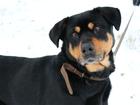 Фото в Собаки и щенки Продажа собак, щенков Очаровательная Дина ищет хозяина. Девочка в Минске 0