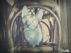 Просмотреть foto  Кошечка породы Сфинкс ищет себе котика для создания семьи, 39060245 в Феодосия