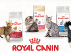 Новое фото  Royal Canin для котов и собак 52236980 в Минске