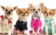 Распродажа одежды для собак от Urban dogs.