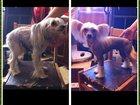 Изображение в Собаки и щенки Стрижка собак Стрижка (тримминг) Вашего питомца у Вас на в Москве 1000