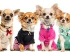 Скачать бесплатно фото  Распродажа одежды для собак от URBAN DOGS, 35861557 в Москве