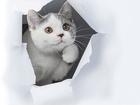 Уникальное foto Другие животные Британские котята , уют и тепло вашего дома! 36603858 в Москве