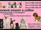 Уникальное фотографию Разное Стрижка кошек и собак Выезд на дом в Москва и Московская область 37346803 в Москве