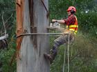 Смотреть фото Разные услуги Спил деревьев 37356779 в Москве
