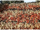 Фото в Одежда и обувь, аксессуары Аксессуары Предлагаем Вам отличные Сухофрукты из Киргизии, в Москве 125