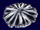 Просмотреть foto Женская одежда Шкурки шиншиллы европейского качества 37652533 в Москве