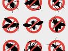 Изображение в Услуги компаний и частных лиц Разные услуги Зачистим ваш дом, офис, объект от насекомых в Москве 1500