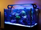 Изображение в Прочее,  разное Разное Заказ аквариума по индивидуальным размерам в Москве 10000