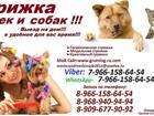 Уникальное фото Услуги для животных Стрижка кошек и собак вызов вызов на дом груминг животных 38733045 в Москве