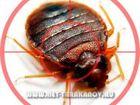 Уникальное фотографию Разные услуги Борьба с тараканами, Выведение, травля тараканов, Звоните: 8 (926) 904-76-54 39162864 в Москве