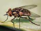 Скачать бесплатно foto Разные услуги Дезинсекция помещений, Борьба с мухами, плодовыми мушками (дрозофилами), 39411396 в Москве