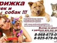 Стрижка кошек и собак, выезд на дом, Москва и Московская область Предлагаем к ва