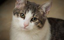 Совершенно необыкновенный котик Штирлиц, 5,5 месяца
