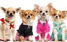 Распродажа одежды для собак от Urban dogs