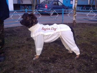 Просмотреть изображение Услуги для животных Комбинезоны от клещей 32717100 в Москве