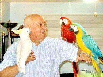 Свежее foto Птички Приму в ответственные руки попугайчиков- в Москве 33061135 в Москве