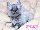 Фотография в Кошки и котята Продажа кошек и котят Официально зарегистрированный монопородный в Москве 0