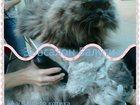 Фото в Домашние животные Услуги для животных Обучение стрижка собак и кошек. Как самому в Москве 25000