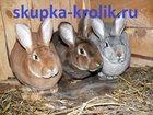 Фотография в   Регулярно покупаем шкуры кролика сухие соленые: в Москве 0