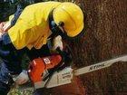 Фотография в   профессиональная работа с деревьями. Выполнение в Данкове 1000
