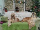 Новое фото Выставки собак Стрижка собак и кошек 33072543 в Москве
