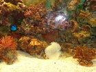 Изображение в Рыбки (Аквариумистика) Купить аквариум Продается морской аквариум со всем содержимым в Москве 35000