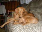 Фото в Собаки и щенки Продажа собак, щенков 05. 09. 2015 г. от плановой вязки родились в Твери 25000