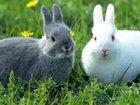 Смотреть изображение  Универсальный комбикорм для кроликов 34145281 в Волгограде