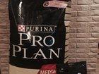 Скачать бесплатно foto  Корм Pro Plan 18 кг, Палочки в подарок 34148655 в Москве