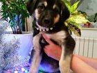 Уникальное фото  Ищет дом очаровательный щенок Магда, 34237496 в Москве