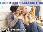 Скачать бесплатно foto  Помощь по обслуживанию ваших домашних питомцев 34257713 в Казани