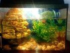 Изображение в Рыбки (Аквариумистика) Аквариумные рыбки Продаю аквариум на 50 л в него входит все в Москве 4000