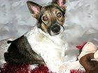 Фото в   Бруно – пёс молодой (до 2х лет), симпатичный, в Москве 0