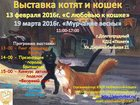 Фото в   Адрес проведения выставки кошек: г. Долгопрудный, в Москве 50