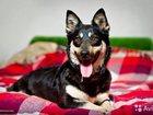 Скачать фото  Небольшая собачка Ева ищет дом! 34501922 в Москве