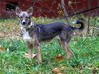 Увидеть фотографию  Небольшая собачка Бекки в дар! 34558443 в Москве