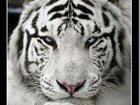 Увидеть фото Услуги для животных стрижка собак и кошек, выезд на дом 34610636 в Москве