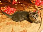 Фотография в   Очаровательный котенок девочка ищет заботливую в Москве 0