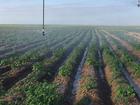 Скачать бесплатно изображение  Ранний картофель 34985308 в Астрахани