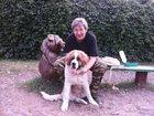 Смотреть изображение Услуги для животных Дрессировка собак в Москве 34989683 в Москве