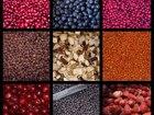 Увидеть фото  Оптовые поставки свежезамороженных ягод и белого гриба 35257395 в Вологде
