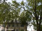 Скачать бесплатно фото Строительство домов Удаление аварийных и опасных деревьев в Москве и Московской области 36326431 в Москве