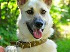 Фото в   Ума добрая, милая и ласковая собачка, стерилизована, в Москве 0