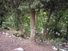 Фотография в   Продам земельный участок в г. Ялта (Дубки) в Ялта 7800000