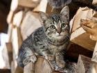 Фото в   Два котенка, мальчик и девочка, с надеждой в Москве 0