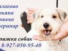 Фото в Собаки и щенки Стрижка собак Татьяна Копшева - ветеринарный врач (практика в Балаково 800